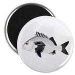 Black Margate fish Magnets