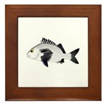 Black Margate fish Framed Tile