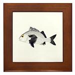 Black Margate fish Framed Tile