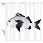 Black Margate fish Shower Curtain