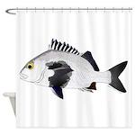 Black Margate fish Shower Curtain