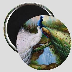 peacocks Magnets