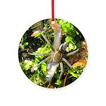 6 Spotted Fishing Spider v Mosquitofish Ornament (