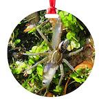 6 Spotted Fishing Spider v Mosquitofish Ornament