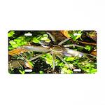 6 Spotted Fishing Spider v Mosquitofish Aluminum L