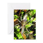 6 Spotted Fishing Spider v Mosquitofish Greeting C