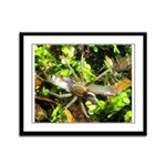 6 Spotted Fishing Spider v Mosquitofish Framed Pan