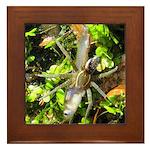 6 Spotted Fishing Spider v Mosquitofish Framed Til