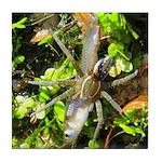 6 Spotted Fishing Spider v Mosquitofish Tile Coast