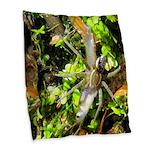 6 Spotted Fishing Spider v Mosquitofish Burlap Thr