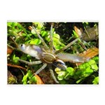 6 Spotted Fishing Spider v Mosquitofish 5'x7'Area