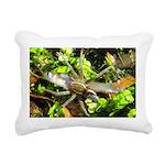 6 Spotted Fishing Spider v Mosquitofish Rectangula