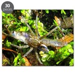 6 Spotted Fishing Spider v Mosquitofish Puzzle