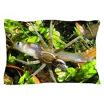 6 Spotted Fishing Spider v Mosquitofish Pillow Cas