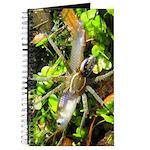 6 Spotted Fishing Spider v Mosquitofish Journal