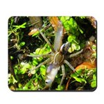 6 Spotted Fishing Spider v Mosquitofish Mousepad
