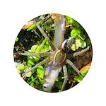 6 Spotted Fishing Spider v Mosquitofish 3.5