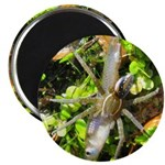 6 Spotted Fishing Spider v Mosquitofish Magnets