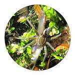 6 Spotted Fishing Spider v Mosquitofish Round Car
