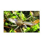 6 Spotted Fishing Spider v Mosquitofish Rectangle