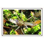 6 Spotted Fishing Spider v Mosquitofish Banner