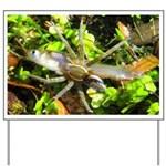 6 Spotted Fishing Spider v Mosquitofish Yard Sign