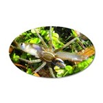 6 Spotted Fishing Spider v Mosquitofish Wall Decal