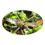 6 Spotted Fishing Spider v Mosquitofish Sticker