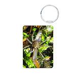 6 Spotted Fishing Spider v Mosquitofish Keychains