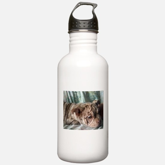 Cream Merle Old English Bulldog Puppy Water Bottle