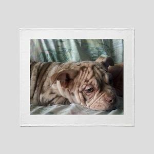 Cream Merle Old English Bulldog Puppy Throw Blanke