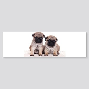 Pug Bumper Sticker