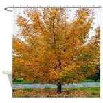 Autumn Leaves Sugar Maple Tree Shower Curtain