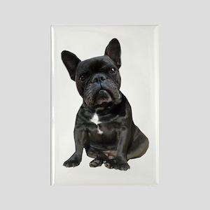 French Bulldog Puppy Portrait Rectangle Magnet