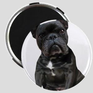 French Bulldog Puppy Portrait Magnet