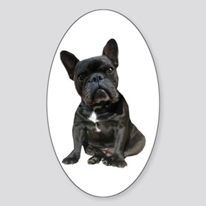 French Bulldog Puppy Portrait Sticker (Oval)