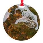 Taneycomo Sculpin in thin water Ornament