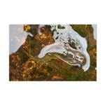 Taneycomo Sculpin in thin water Posters