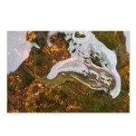 Taneycomo Sculpin in thin water Postcards (Package