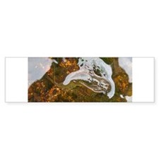 Taneycomo Sculpin in thin water Bumper Sticker