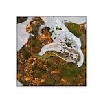 Taneycomo Sculpin in thin water Sticker