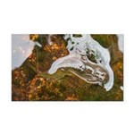 Taneycomo Sculpin in thin water Rectangle Car Magn