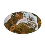 Taneycomo Sculpin in thin water Oval Car Magnet