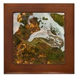 Taneycomo Sculpin in thin water Framed Tile