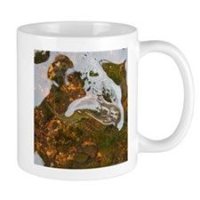 Taneycomo Sculpin in thin water Mugs