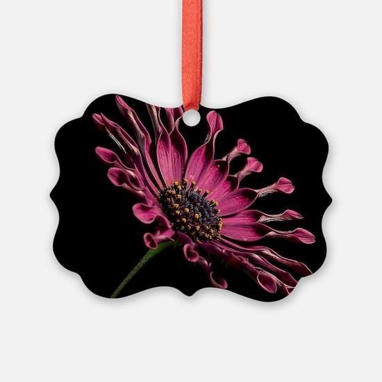 Daisy2 Ornament