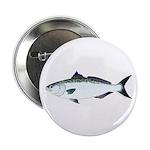 Australian Salmon kahawai 2.25