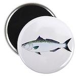 Australian Salmon kahawai Magnets
