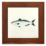 Australian Salmon kahawai Framed Tile