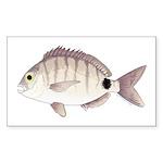 Spottail Bream Pinfish Sticker